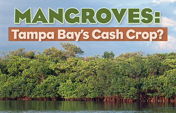 benefits of mangroves forests environmental sciences essay The general distribution of mangrove forests are in both tropical and sub-tropical parts of the world with them only being found at latitudes of 25on and 25os of.
