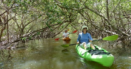 The mangrove tunnels at Weedon Island offer a shady respite for paddlers.