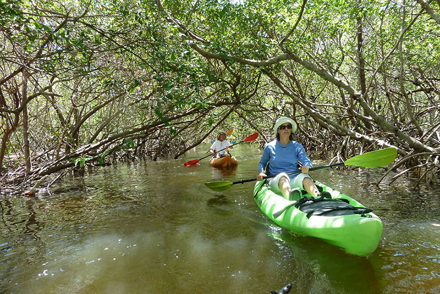 Tampa Bay Rivers And Bays Ideal For Exploring By Kayak