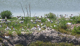 NB-nesting-birds