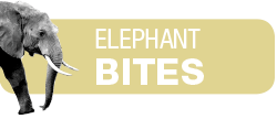 elephant-bites-header