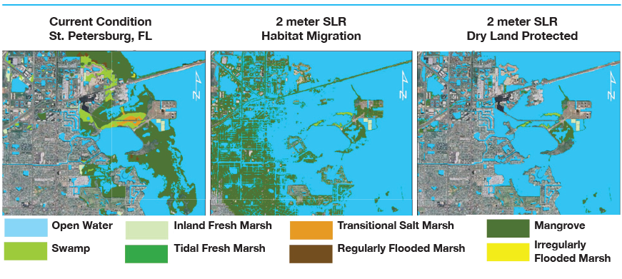 Example GIS output of SLAMM model showing changes to coastal habitat coverage adjacent to St. Petersburg and Weedon Island given a 2.0m sea level rise by 2100 & two different land management strategies.