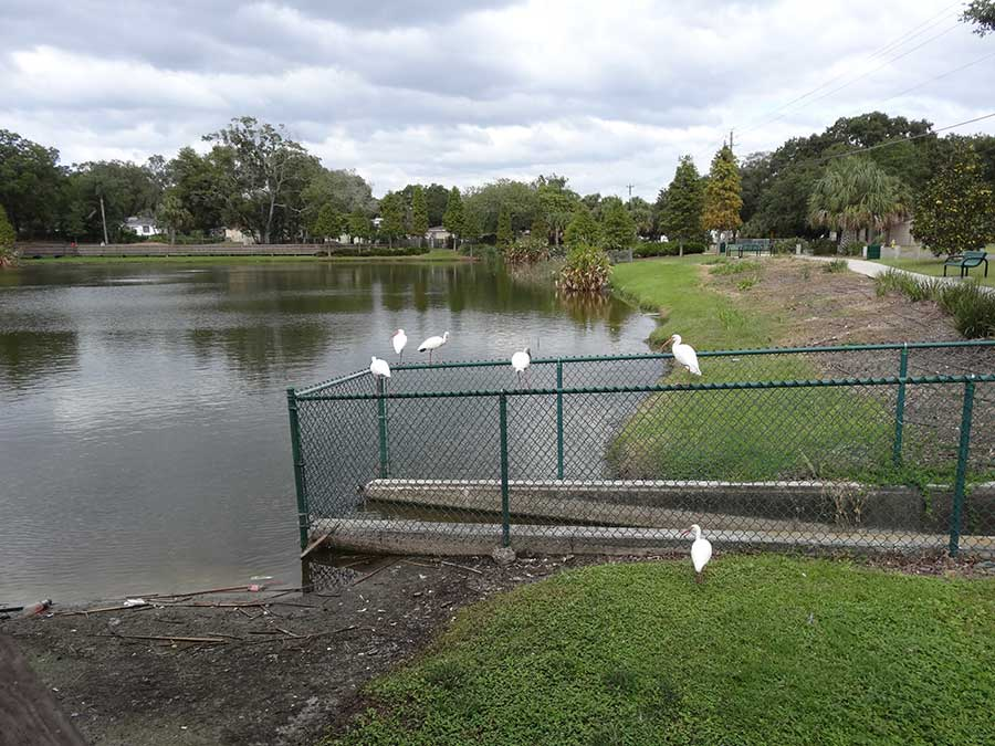 Usf project helps build water smart neighborhoods bay for Koi pond builders tampa