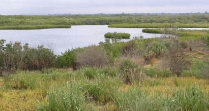 The restoration of the Schultz Preserve allowed SWIM to re-create the original estuarine habitat that had been covered with dredged material in the 1960s. It's one of the few projects of its kind in the nation.