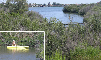 SWIM's restoration of Clam Bayou created a natural oasis in urban Gulfport.