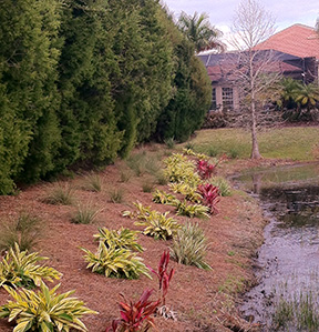 Plantings along stormwater ponds help capture nutrients at Lakewood Ranch where a separate initiative now underway focuses on teaching residents about how their lawns impact rivers and Tampa Bay.