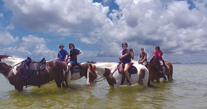 Horses and their riders cool off in Tampa Bay. Photo courtesy C Ponies Beach Horses.