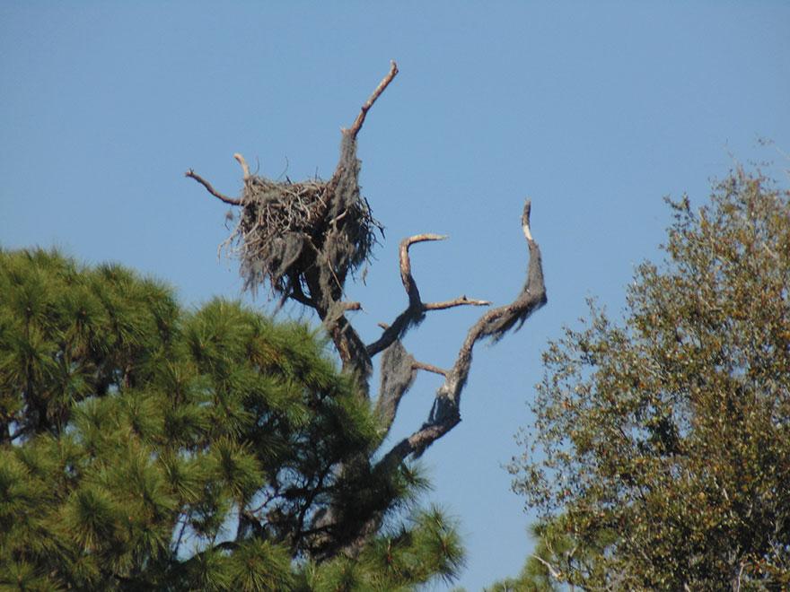 bird-watching-with-benefits-nest