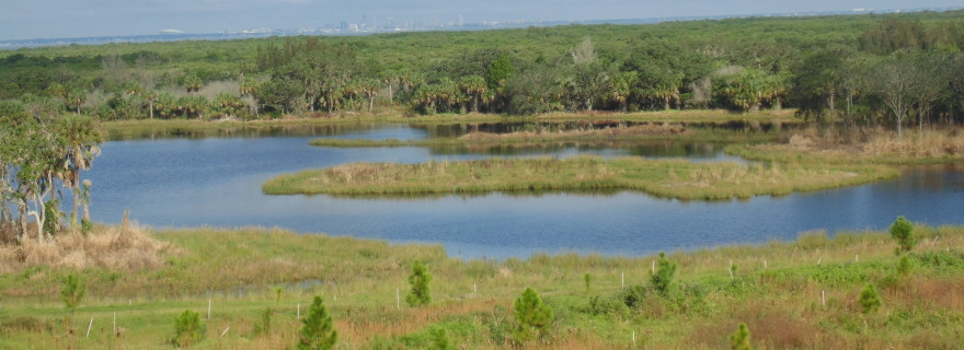 Last year's near-record marsh grass planting shows how quickly ecosystems can recover.