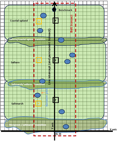 Transects-graph-sm