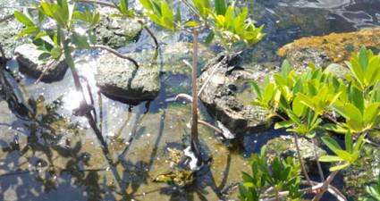 living-shorelines-feature-web