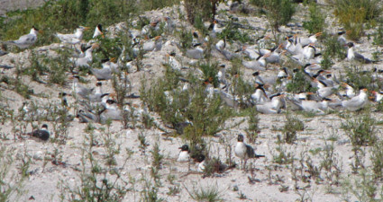 migratory-bird-web-feature