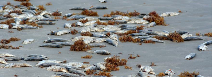 Самое большое скопление рыбаков всегда наблюдается в южной части водоема, но хорошо ловится рыба и в северной части, а также со стороны города или балтийского моря.