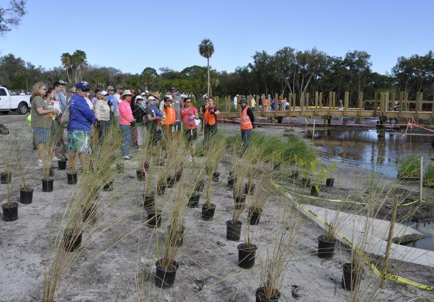 Volunteer plantings